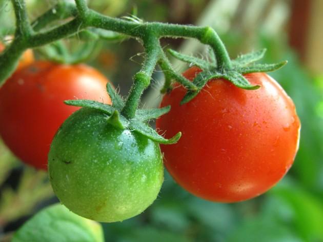Lekkere goedkope Tomatensoep