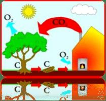 Koolstofzuurstof kringloop